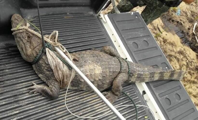 Animal foi resgatado por uma equipe da Polícia Ambiental