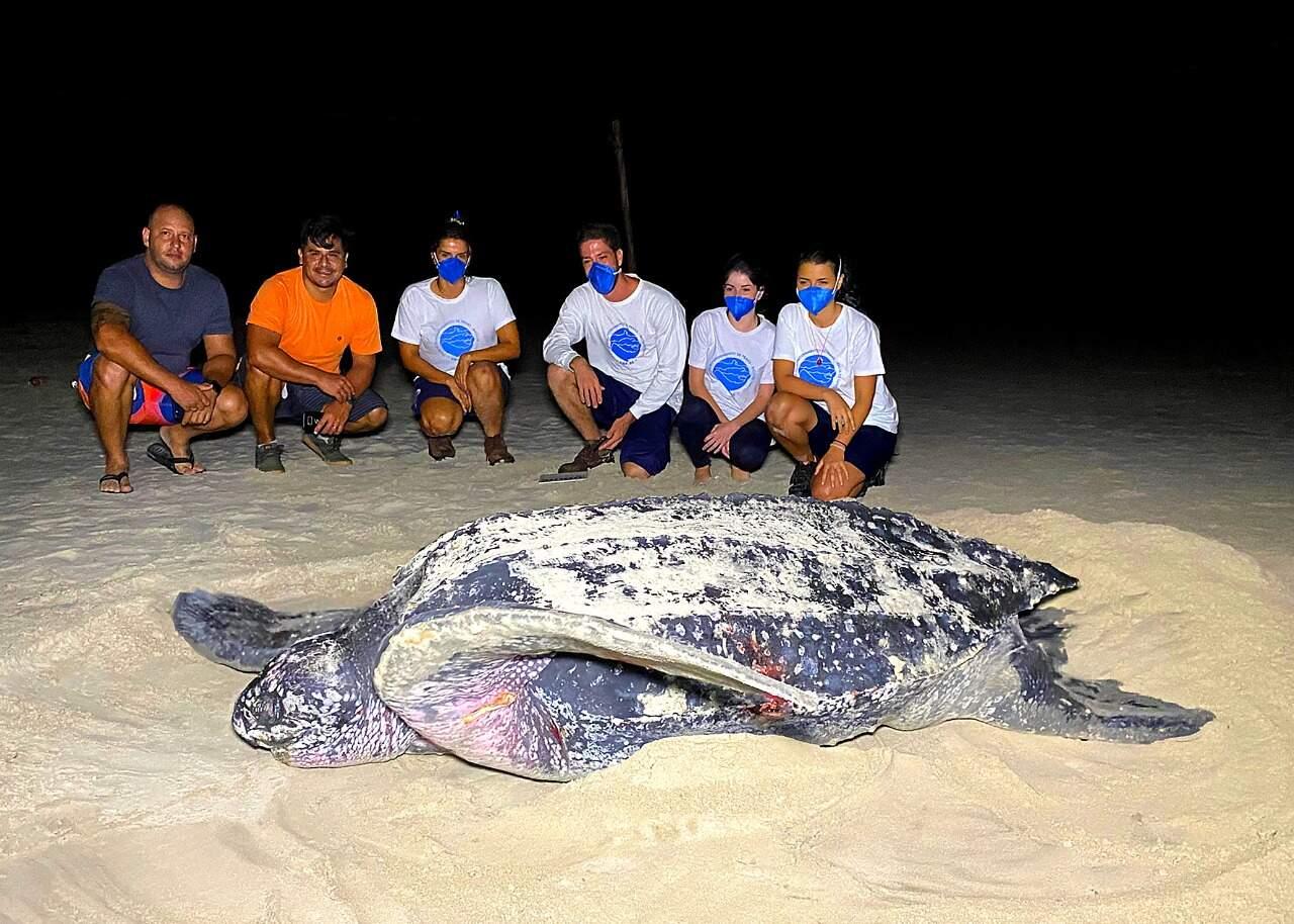 Tartaruga foi encontrada na região do bairro Suarão, em Itanhaém