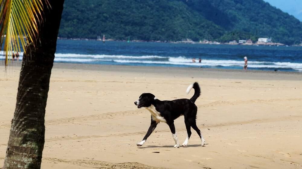 Cães e tutores precisarão seguir regras para utilizar as praias de Santos