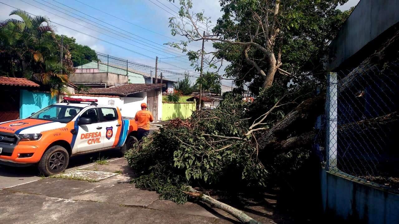 No período, 25 árvores caíram na região devido a ventos e chuvas fortes