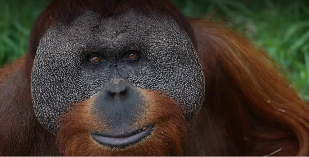 Berami é de uma espécie considerada em perigo de extinção