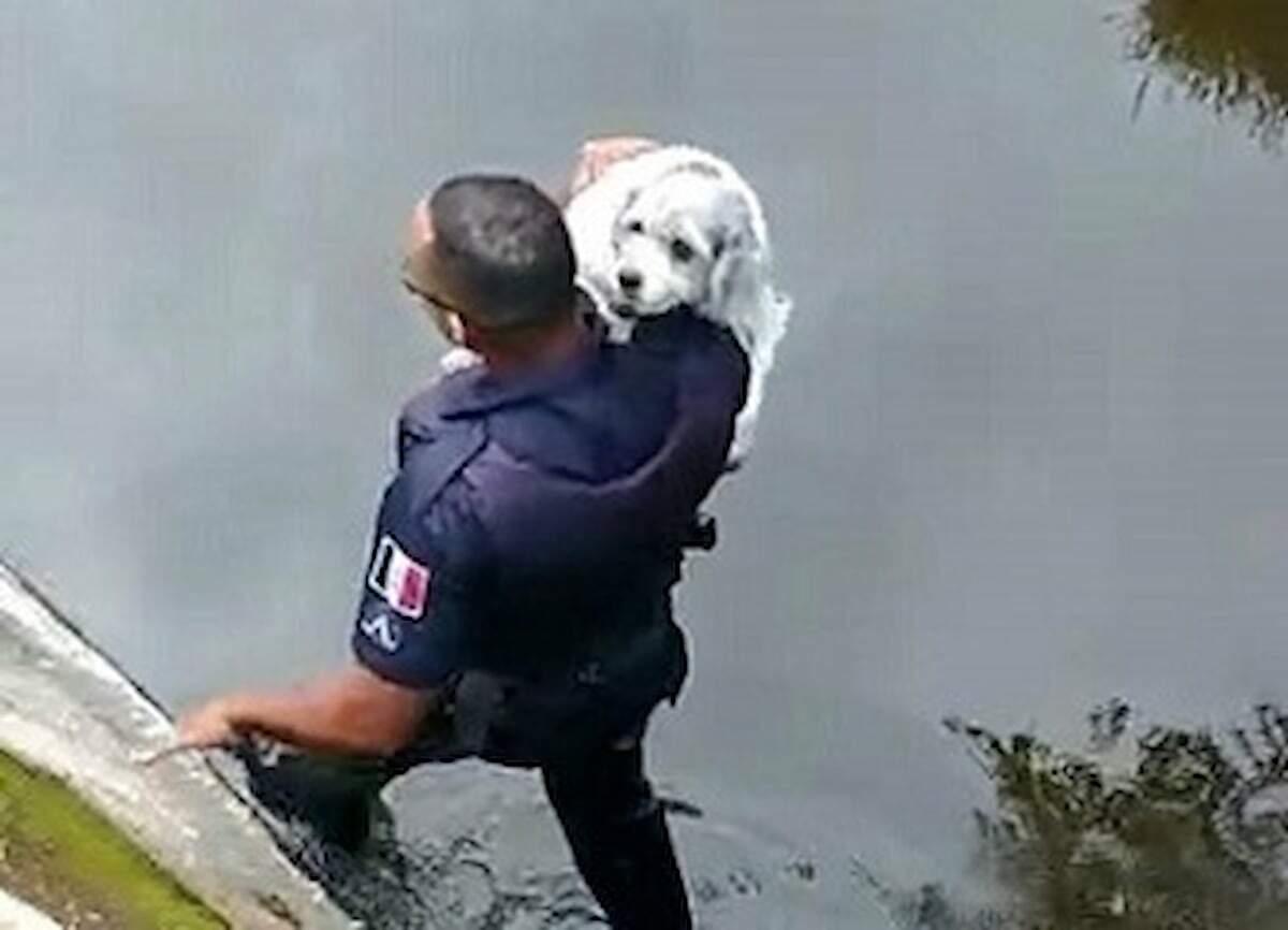 Em ronda a GCM percebeu uma movimentação e resgatou o cãozinho