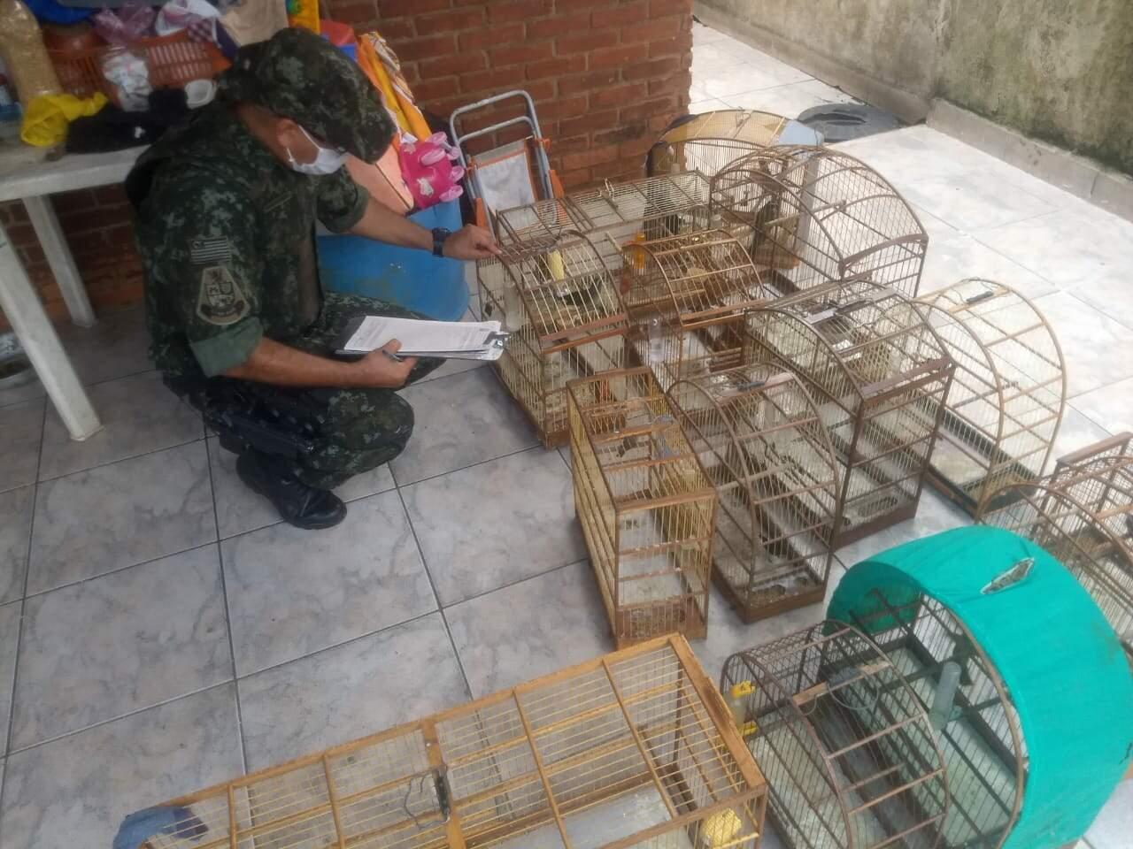 Proprietários dos animais não possuíam  documentação de autorização