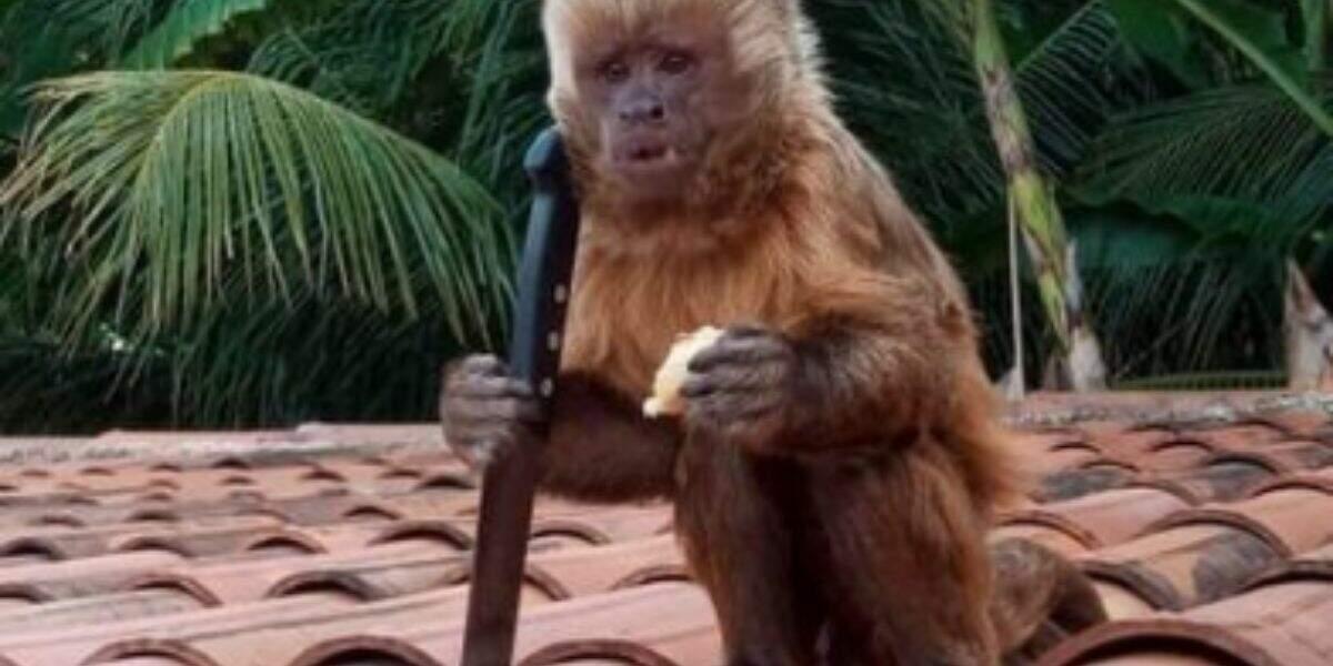 Macaco causou muita confusão ao invadir casa